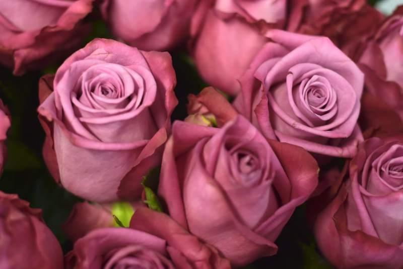 Significado de soñar con rosas