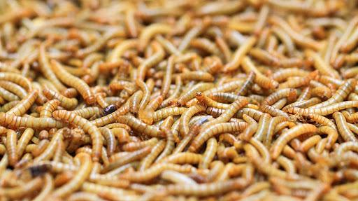 Soñar que ves gusanos