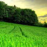 Qué significa soñar con campos de hierba