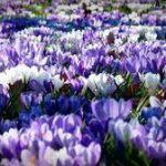 Qué significa soñar con un campo de flores