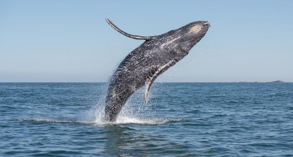 Soñar con ballenas saltando