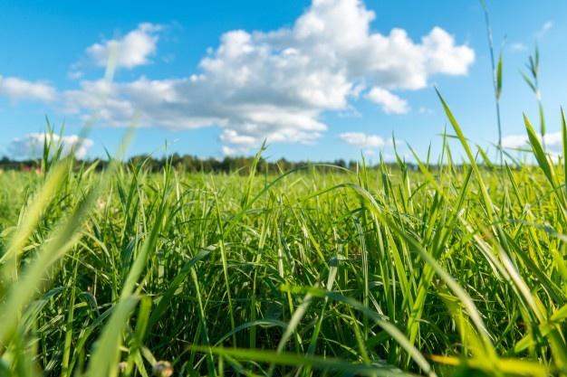 Soñar con campos de hierbas muy altas