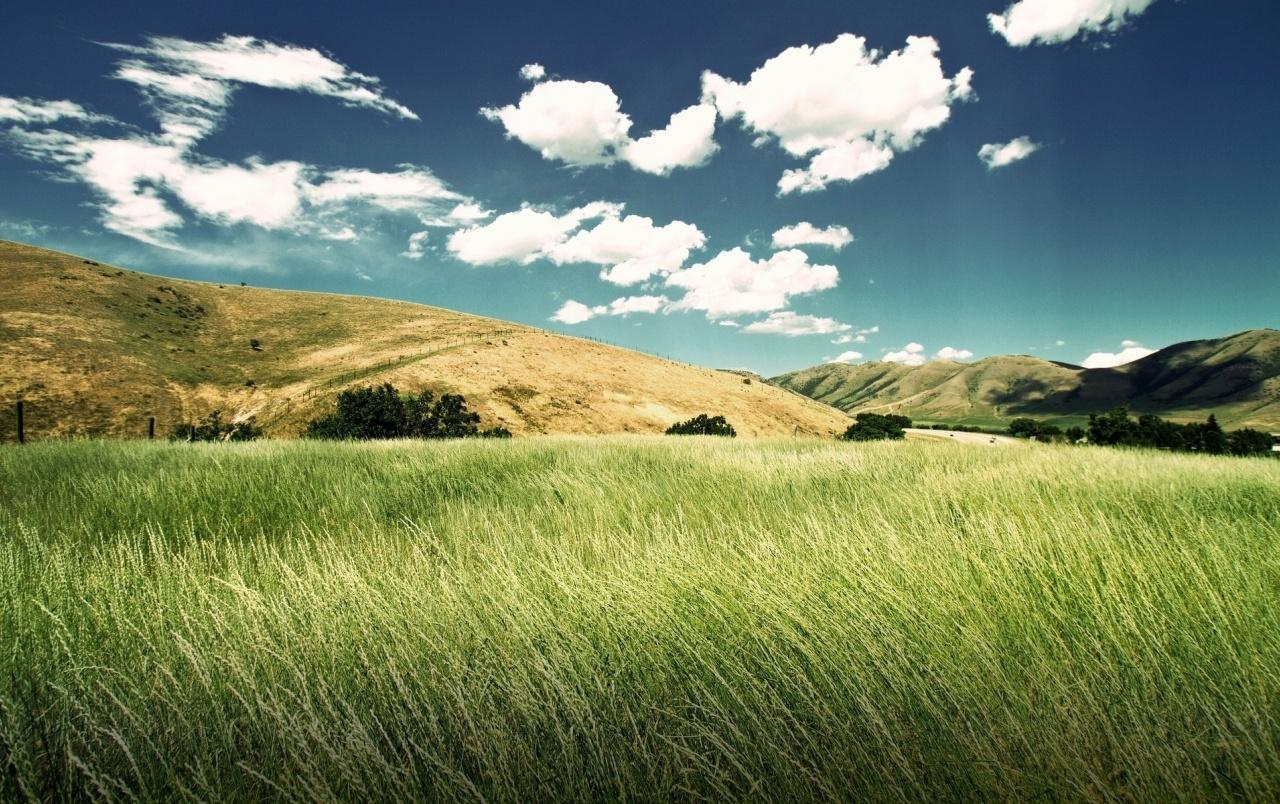 Soñar con campos de hierbas verdes