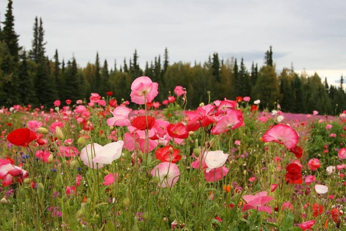 Soñar que corres en campos de flores