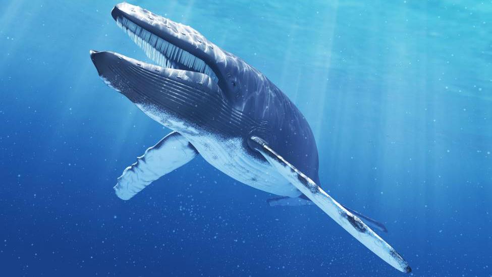 Soñar que nadas con ballenas